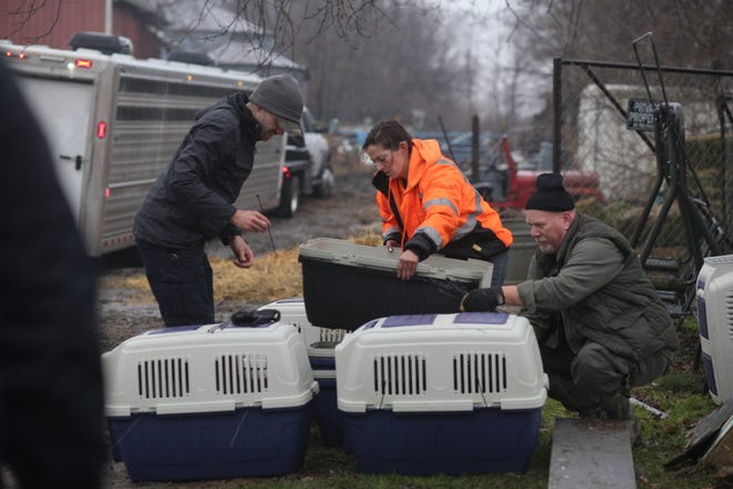 Animal rescue groups brought over 100 animals back to their facilities Monday from a roadside zoo, Cricket Hollow Animal Park, where they lived in deplorable conditions.