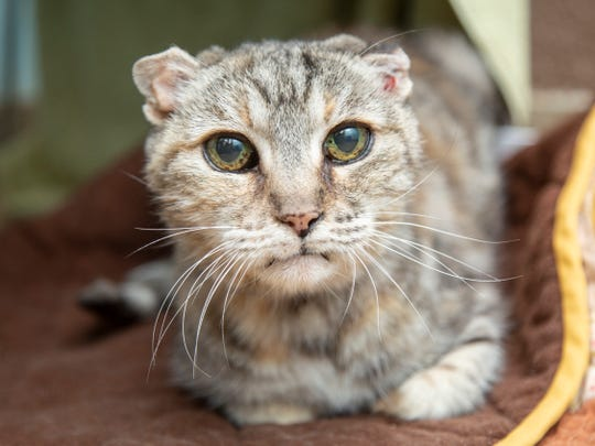 Adelaide is available for adoption with Arizona Humane Society. For more information, call 602-997-7585 ext. 2156 and ask for animal number 623488.