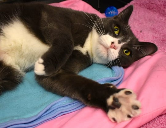 Bobby is available for adoption at 11129 Michigan Ave. in Youngtown. For more information, call 623-876-8778 after 10 a.m.