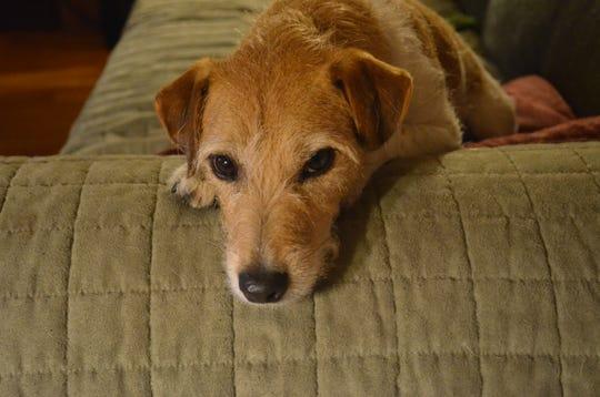 Harry, the Miller family dog.