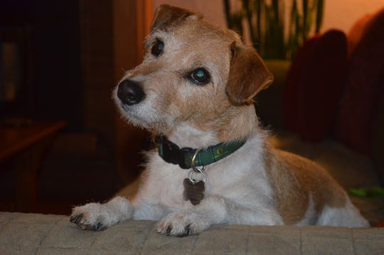 Harry, el perro de la familia Miller