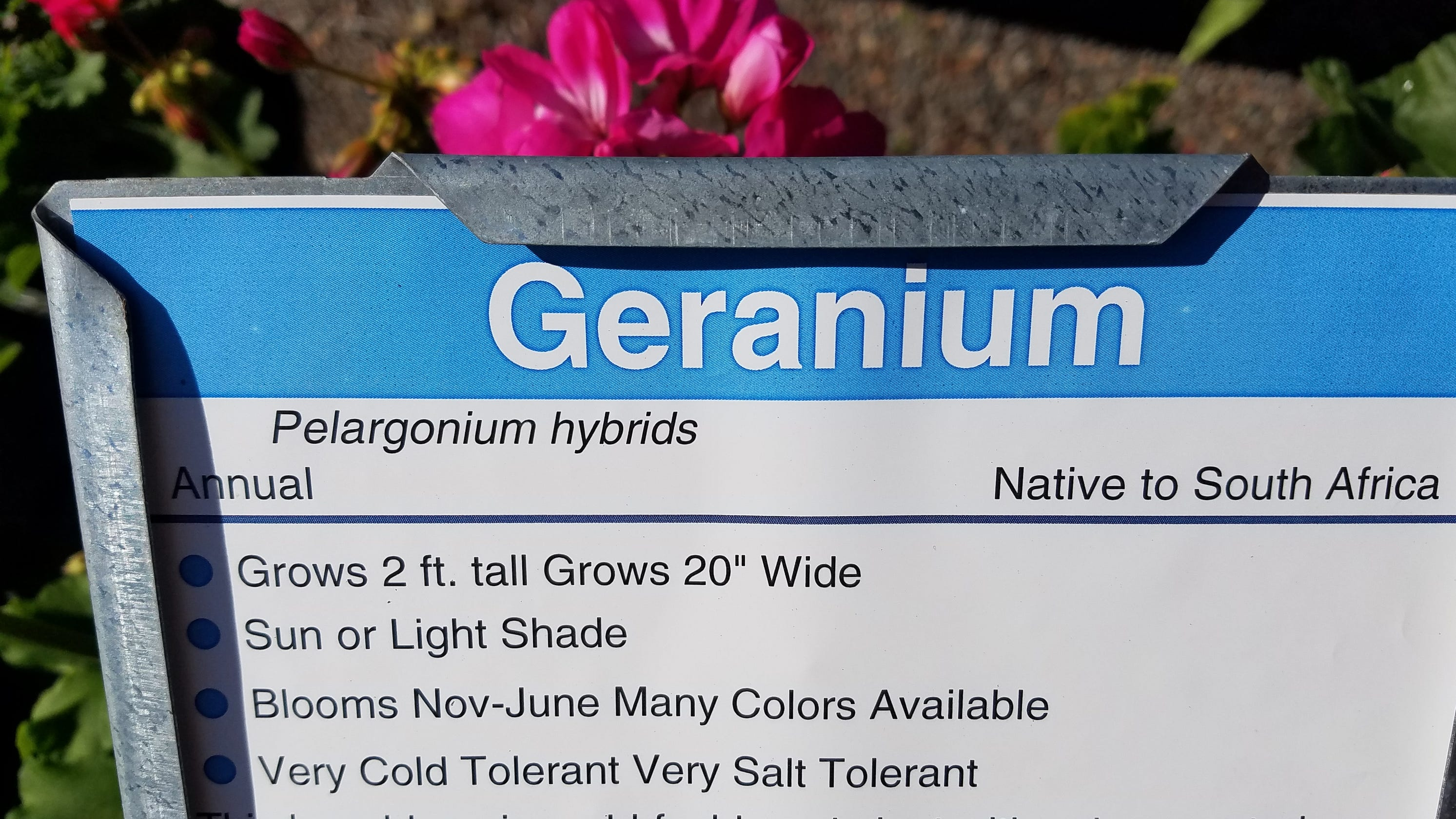 Scientific Plant Names Can Be Important Especially With Edible Plants