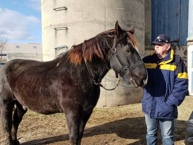 Milwaukee police horse Prince has retired after 19 years of service