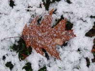 A fallen leaf rest in a dusting of snow that fell overnight in Wilmington.