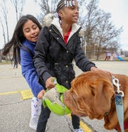 Karen Ruiz Aragon and Anyliah Johnson play with Ari at Slaughter Elementary.  Ari is a three year old Dogue de Bordeaux (French Mastiff) and a service dog for teacher Amber Pendleton and is a fixture in her classroom at Slaughter Elementary where his also serves as a therapy dog for the school.December 1, 2019