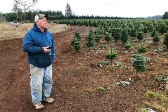 Jan Hupp holds a radio as he stands on his Christmas tree farm in Silverton, Ore. Hupp said his business couldn't operate at the level it does without immigrant workers.