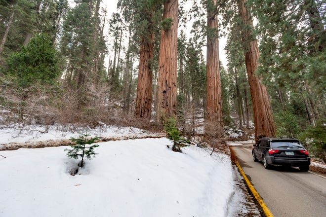 Visitors pass though the Four Guardsmen Sequoia trees on General's Highway in Sequoia National Park on Wednesday, December 11, 2019.