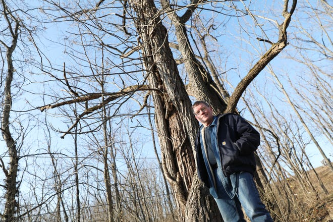 Kelvin Kreager stands by the black walnut tree that may have saved his life after he was knocked unconscious while mowing at his farm near Zanesville last year. The tractor hit the tree and stopped while Kreager was slumped over the steering wheel.