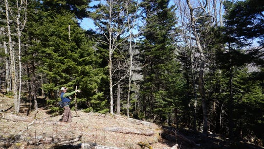 Marquette Crockett, SAHC's Roan Stewardship Director, surveys land on Roan Mountain recently purchased for conservation.