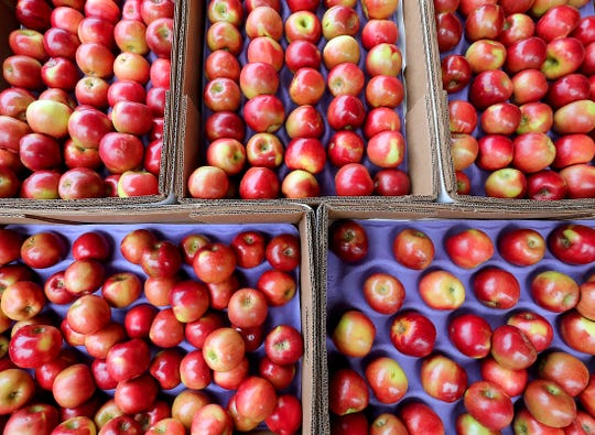 Cosmic Crisp apples at Colello's Farm Stand Produce in South Kitsap on Friday.