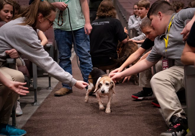 Ample, a senior beagle up for adoption, is greeted by students during the Building Animal Responsibility and Knowledge (B.A.R.K.) program presented by the Henderson Humane Society and Animal Control at South Middle School Wednesday afternoon. The kids were taught the basics of dog care which included feeding, vaccinations and shelter.