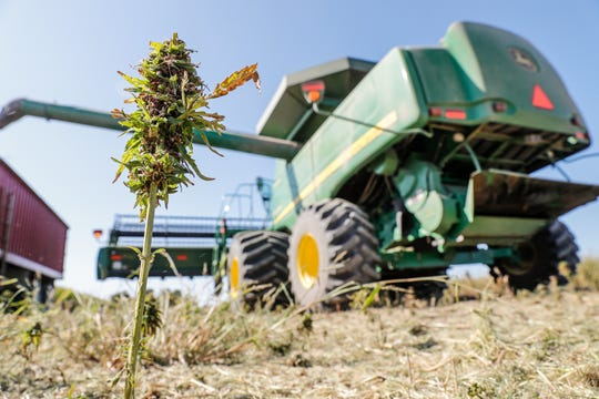 Mississippi lawmakers could decide in the 2020 legislative session whether farmers can grow hemp here, like this farm in Indiana.