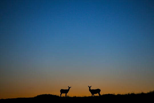 Deer are silhouetted against a morning sunrise at Grand Teton National Park in Wyoming.