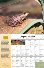 The 2020 Wisconsin Phenology Calendar produced by the Aldo Leopold Foundation includes historical dates of arrivals of migrating species and emergences of hibernating species.