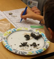 Master Naturalists guide grade school children through dissecting owl pellets and identifying small animal bones they found there during a summer nature program at the Donald W. Reynolds Library.