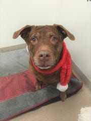 Sophia is waiting at the Oshkosh Area Humane Society for a forever home.