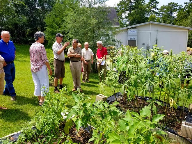 Green Alliance members inspecting the Holy Comforter Episcopal Church vegetable garden.