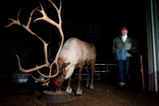 Janie Bethards feeds one of her reindeer at the family's farm in Garden Grove.