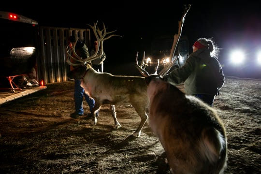 Janie Bethards, right, helps load her reindeer at her family's Garden Grove farm for a a show in Urbandale. Bethards owns Iowa Reindeer Rental, which provides reindeer for special events during the holidays.