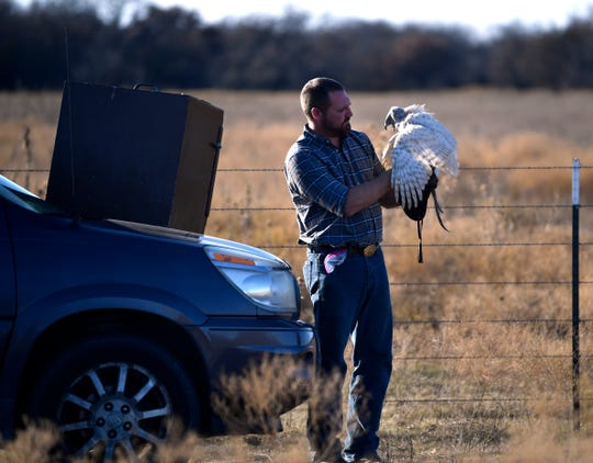 Mark Smith holds a Goshawk named Ellie as he prepares to hunt with her in Eastland County.