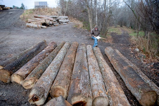Don Shuford, owner of Sunrise Sawmill, measures logs before cutting them at the mill in Asheville on Nov. 26, 2019. Shuford has been running the sawmill for more than 30 years.