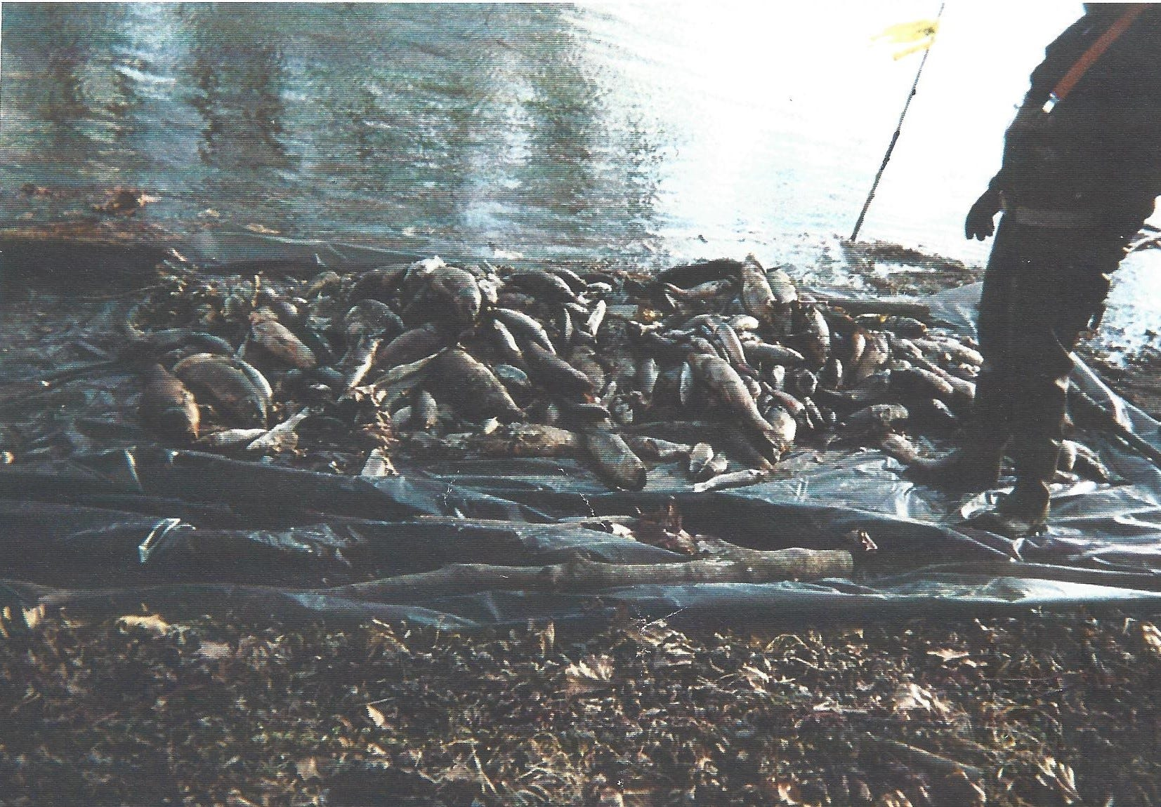 Dead fish on the banks of the White River after the Guide spill in December of 1999. The Guide Corp. in Anderson dumped toxic chemicals into the White River, ultimately killing more than 4 million fish through Downtown Indianapolis.