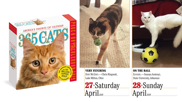 Best gifts under $20: Cat calendar