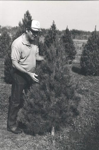 Al Buehring checks trees for insects at Evergreen Acres Christmas Tree Farm in Odem in November 1991.