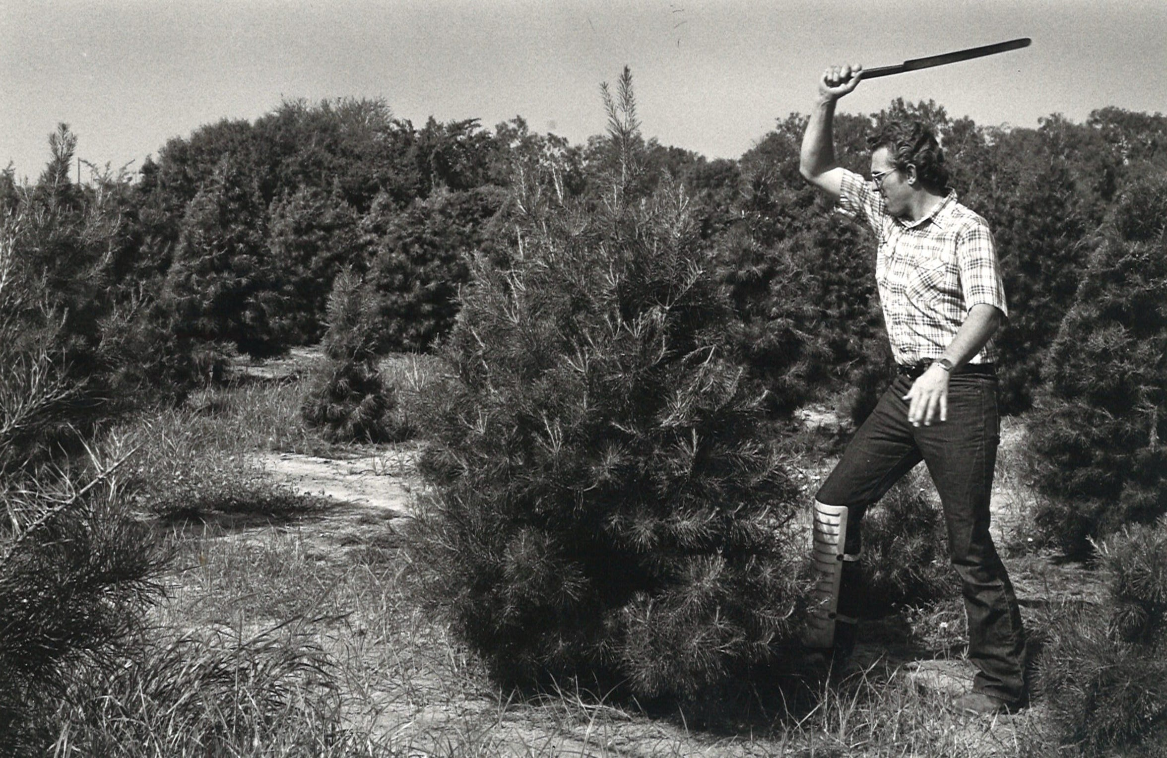 Phillip Storm of Storm Nursery in Premont, TX, demonstrates shaping a pine tree suitable for Christmas tree sales in June 1983.