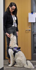 Macomb County's 16th Circuit Court - Juvenile Division caseworker supervisor Amy Mitchell pets Izzy, her therapy dog in training, before Izzy greets teenagers prior to their review hearings.