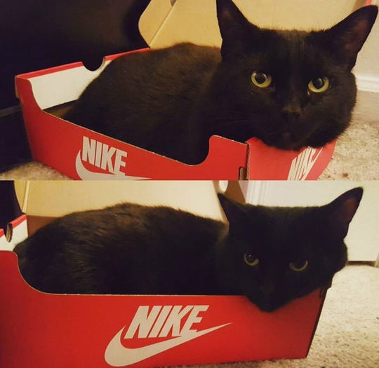 """The Nike slogan is """"Just Do It,"""" but Fats lives by the motto of """"Just Don't."""""""