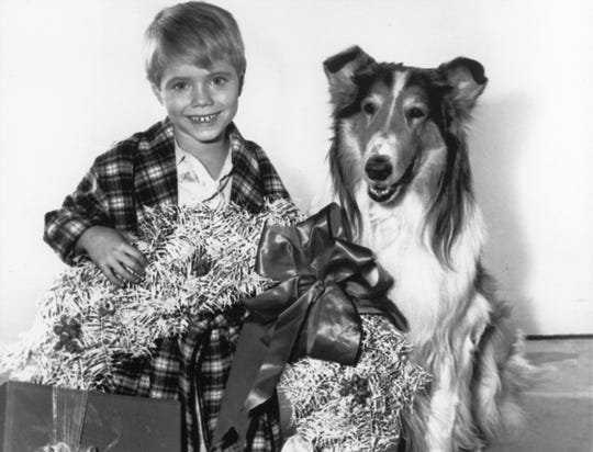 Jon Provost and Lassie post for a Christmas episode photo.
