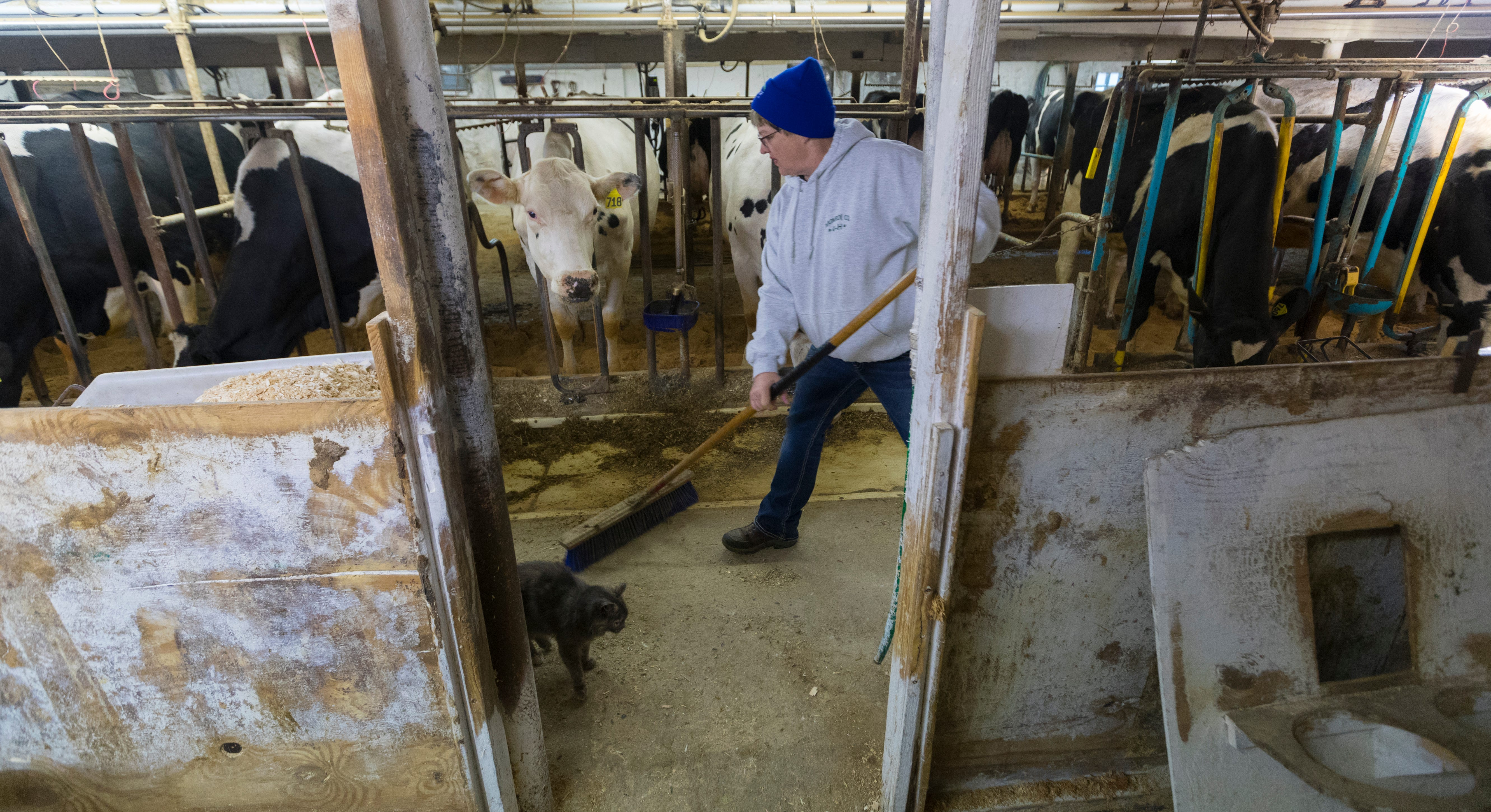 Annette Trescher sweeps around a barn cat while doing morning chores on her family's farm in Cashton. They currently milk about 80 cows twice a day.