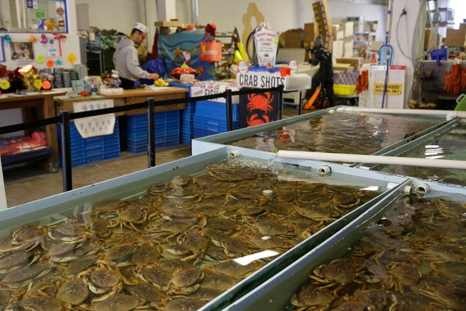 FILE - In this Nov. 16, 2018, file photo, fresh Dungeness crabs fill tanks at the Alioto-Lazio Fish Company at Fisherman's Wharf in San Francisco. The commercial Dungeness crab fishing season in the San Francisco Bay Area has begun after a monthlong delay. Crab fishermen started hauling in the wiggly crustaceans Sunday, Dec. 15, 2019, in time for the holiday season. (AP Photo/Eric Risberg, File)