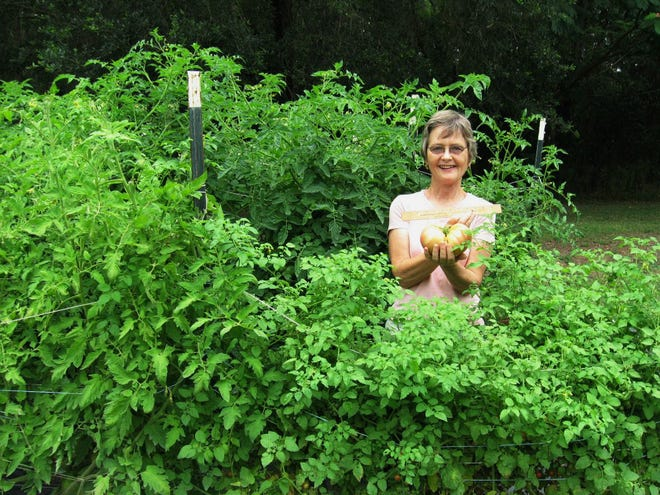B O'Toole amidst her organically grown tomato plants at O'Toole's Herb Farm in Madison. O'Toole died on Dec. 5 after a nearly 3-year battle with cancer.