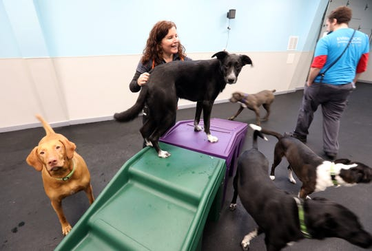 General manager Suze Misuraca and assistant general manager John McCarthy  interact with the dogs during playtime at Dogtopia, a doggie daycare facility in Yorktown Dec. 16, 2019. The facility also offers boarding and spa services.