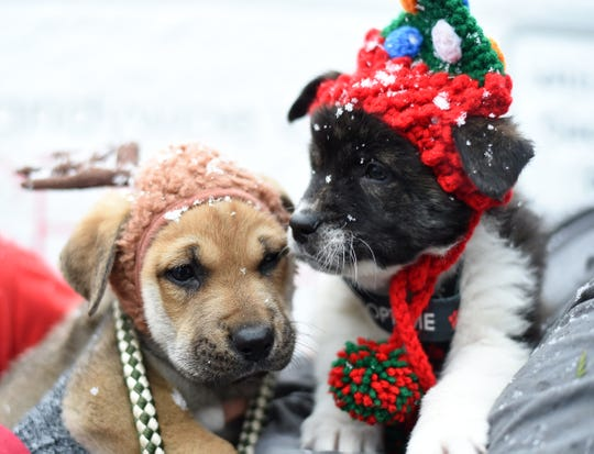 Families can host a shelter pet for a few days during the holiday season through BVSPCA.