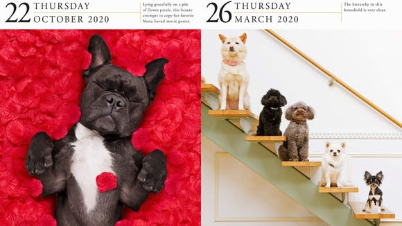 Gifts our editors love 2019: Dog a Day calendar