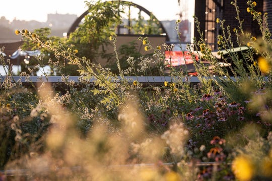 "Although the High Line is in the heart of the city, the planting design is naturalistic and a little bit wild. Piet Oudolf, the renowned Dutch plantsman who designed the planting plan, says he was not attempting to copy nature but to ""re-create the emotion"" of being in a natural place."