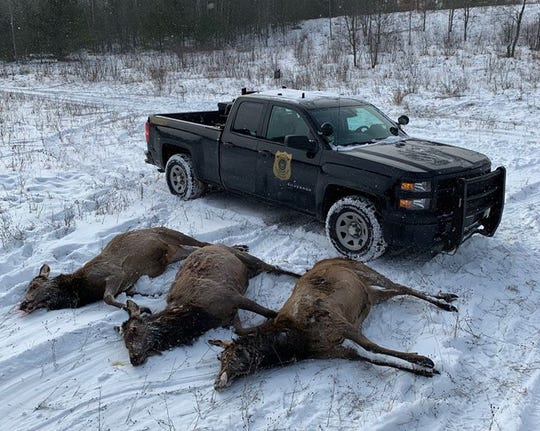 Michigan conservation officers in Gaylord are seeking information regarding the poaching of three elk in Otsego County.