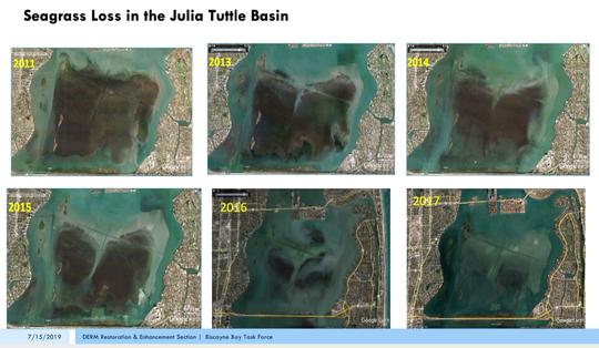 Seagrass loss in the Julia Tuttle Basin.