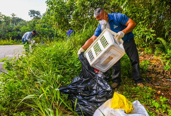Glenn San Nicolas, Guam Environmental Protection Agency solid waste program manager, and other agency employees rummage through weeds and illegally dumped trash along Chalan Ramirez in Yigo, searching for clues or information that could lead them to its possible source in this Dec. 18, 2019, file photo.