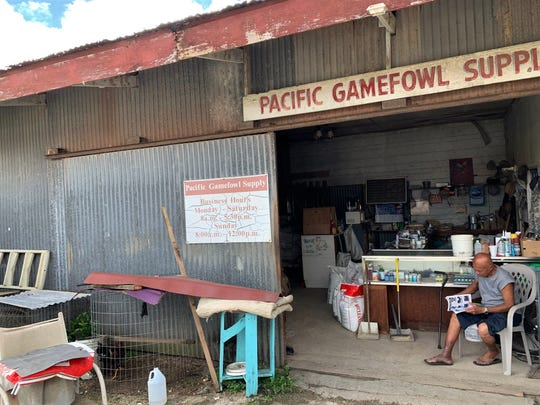 "Rick Davo, 79, owner of Pacific Gamefowl Supply, in Agat, thumbs through ads in a mainland magazine that offer roosters for sale as ""show birds."" Davo said about 90 percent of his business is related to cockfighting."