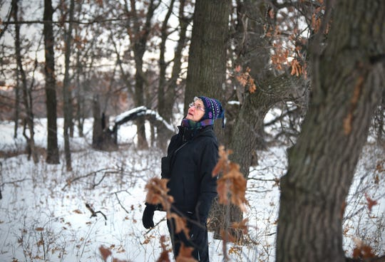 Sue Hix scans tree branches for birds during the Christmas Bird Count Wednesday, Dec. 18, 2019, at the Sherburne National Wildlife Refuge.