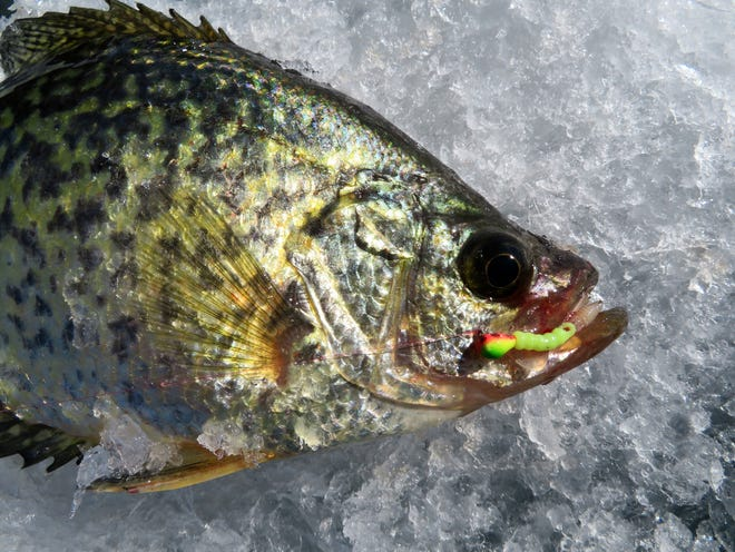 Choosing the correct ice jig can play a role in successful fishing.