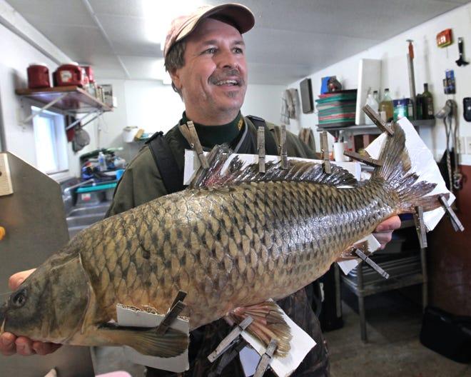 """À Prairie du Chien, Wisconsin, """"Droppin 'de la carpe"""" est une tradition de la Saint-Sylvestre.  Un poisson comme celui-ci (nommé Lucky) est abaissé par une grue dans un berceau en bois sur l'île de Saint-Feriole, où des centaines de personnes font la queue pour embrasser ses lèvres gelées pour lui porter chance."""