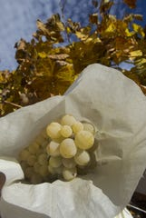 Spaniards eat 12 grapes when the clock strikes midnight on New Year's Eve.
