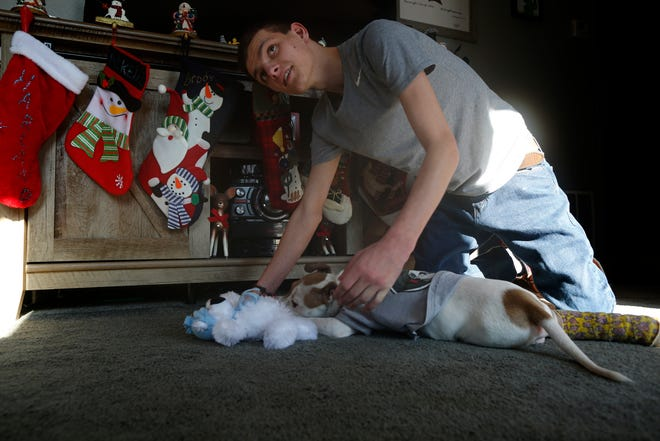 Andrew Allen plays with his new puppy, Harland, at their family's home in Colerain Township.