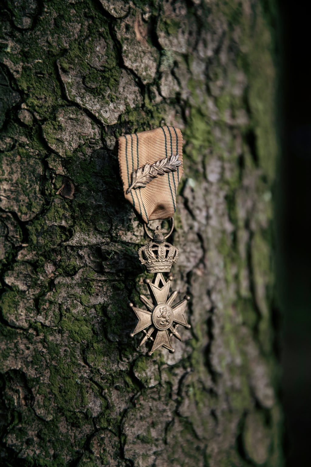WWII U.S. Army 1st Sgt. Raymond McDonogh's Cross De Guerre medal hangs from a tree in Belgium's Ardennes Forest. The medal is a high honor given by the French government.
