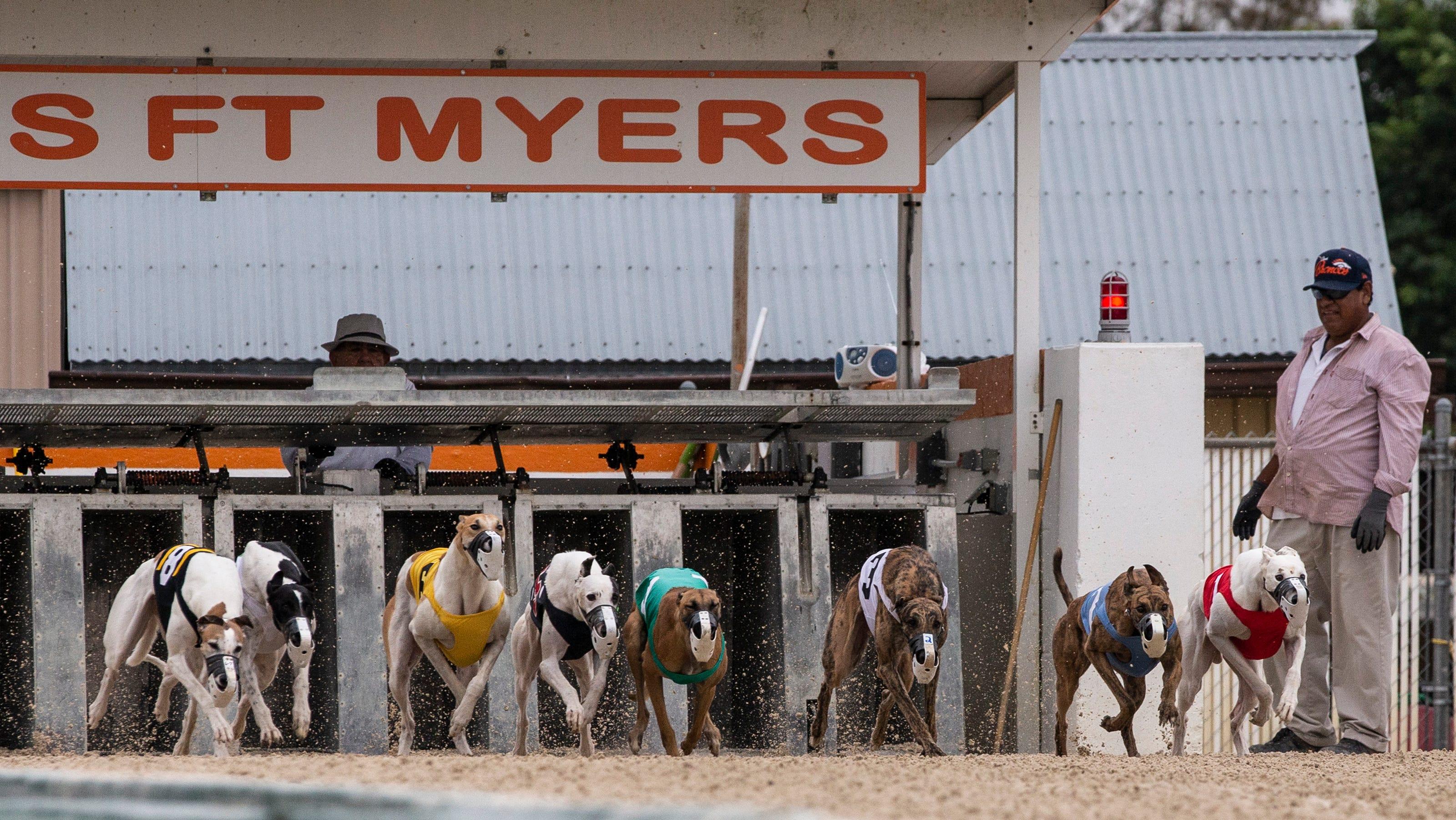 greyhound racing betting terms dime